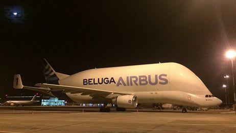 beluga_airbus