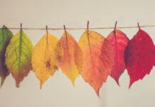 Φθινοπωρινά φύλλα δέντρων