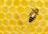 Μέλισσα σε κυψέλη