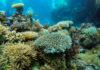 Μεγάλος Κοραλλιογενής Ύφαλος