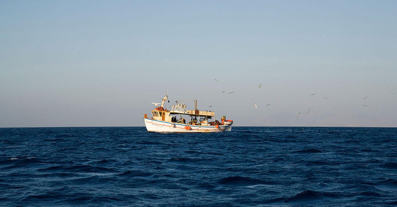 Ψαροκάικο με θαλασσοπούλια